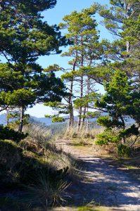 Whalen Island Trail