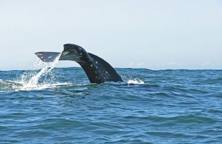 Whale Tail Oregon