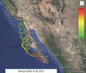 Sea-Turtle-Tracking-Lightning