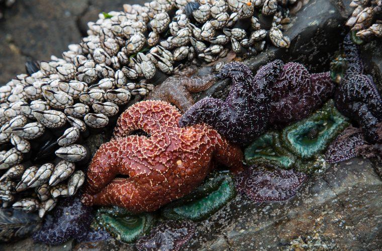 Courtesy Oregon Coast Aquarium